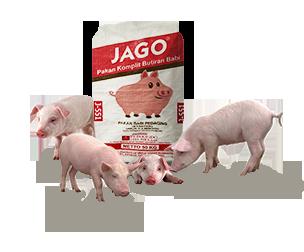 Gambar Pakan Babi